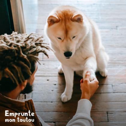 chien donnant la patte à son maître