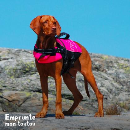 Braque hongrois portant un gilet de sauvetage pour faire du canyoning
