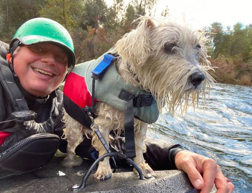 Faire une activité avec son chien : la randonnée aquatique