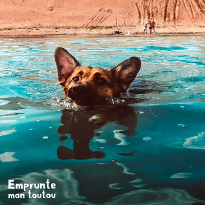 chien en train de nager dans un lac
