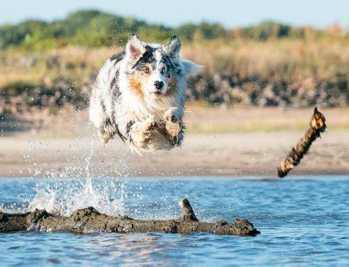 Faire une activité avec son chien : le Dock Diving