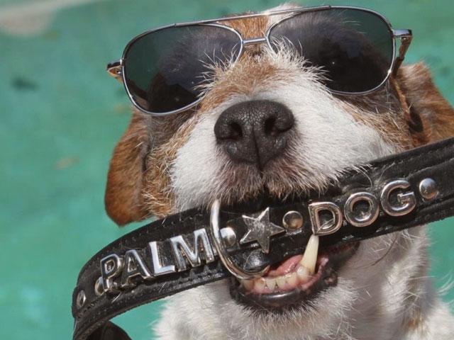 chien tenant la Palm Dog