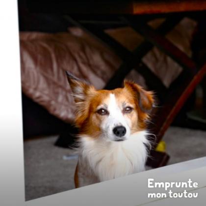 petit chien blanc et marron