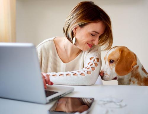 Biofood Shop : la boutique en ligne pour chien spécialiste du naturel
