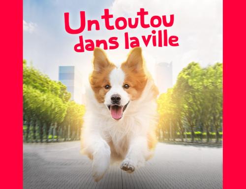 Un toutou dans la ville : les chiens à La Rochelle
