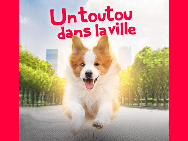 chien courant dans la ville