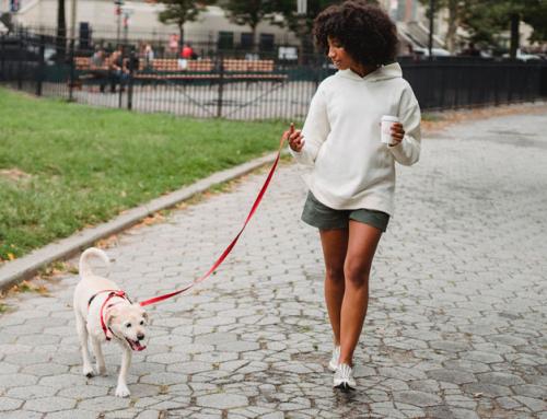 Les Rendez-vous de l'animal en ville : favoriser l'accueil des animaux dans notre vie quotidienne