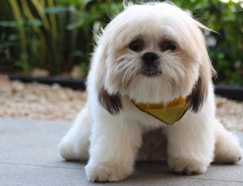 Le langage des toutous : pourquoi mon chien tremble ?