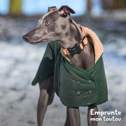 chien de race lévrier portant un manteau