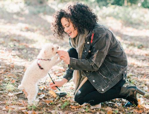Guide du maître : bien nourrir son chien