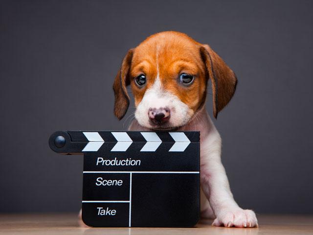 chien de cinéma