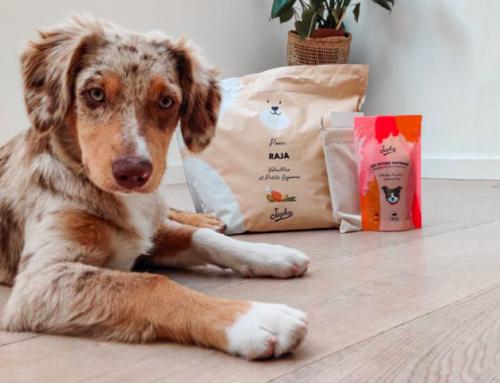 Japhy – Notre avis sur ces croquettes pour chien sur mesure